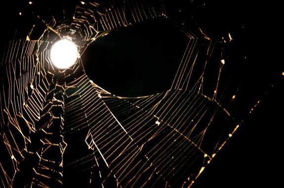 Moon and cobweb image